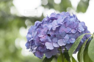 近くの花のアップ - No.720778