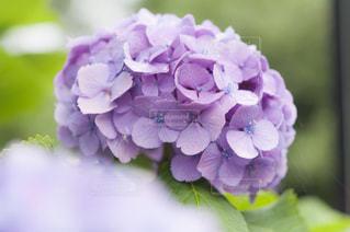 近くの花のアップ - No.720779