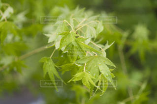近くの植物のアップ - No.720782