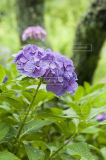 近くの花のアップ - No.720783