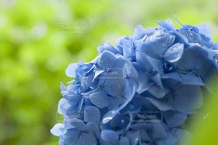 近くの花のアップ - No.720784