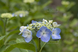 近くの花のアップ - No.720787