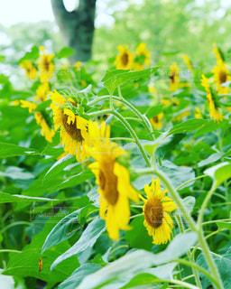 緑の葉と黄色の花 - No.720817