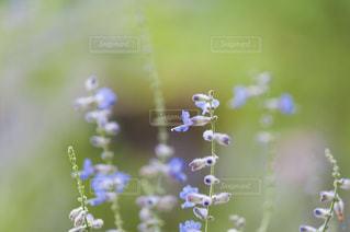 近くの花のアップ - No.720818