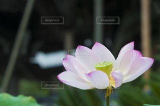 近くの花のアップ - No.720825