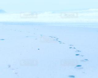 水の体の上を飛んでいる鳥 - No.720826