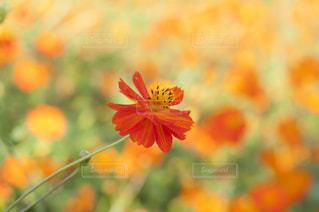 近くの花のアップ - No.757088