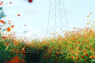フィールドのカラフルな花のグループ - No.757093