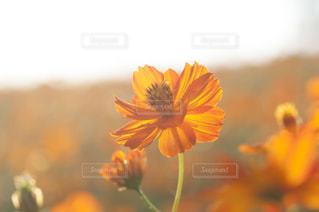 近くの花のアップの写真・画像素材[757095]