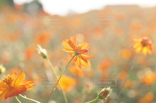 近くの花のアップ - No.757097