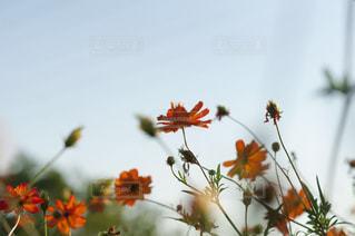 植物の花の花瓶 - No.757099