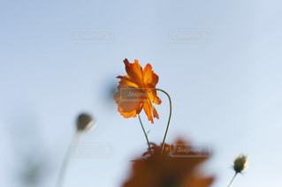 黄色とオレンジ色の花で一杯の花瓶 - No.757101