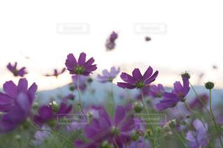 近くの花のアップ - No.785173