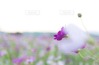 近くの花のアップ - No.785174
