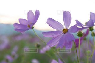 近くの花のアップ - No.785175