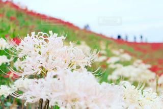 近くの花のアップ - No.785176