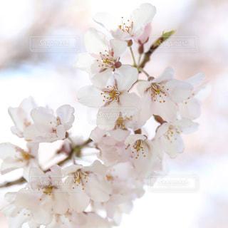 近くの花のアップの写真・画像素材[1197181]
