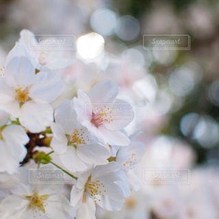 近くの花のアップ - No.1197342