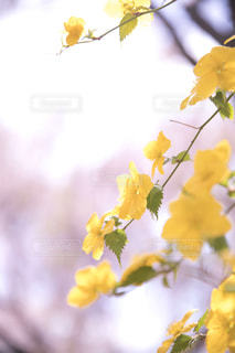 黄色の花の写真・画像素材[1197345]