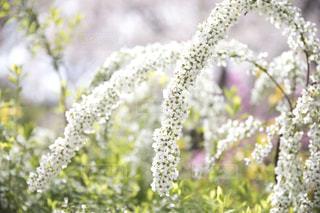 近くの花のアップの写真・画像素材[1197346]