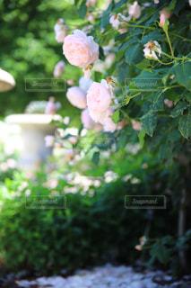 庭の植物の写真・画像素材[1216959]