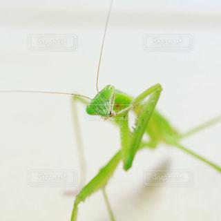 虫の写真・画像素材[704001]