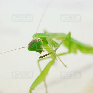 虫の写真・画像素材[704002]