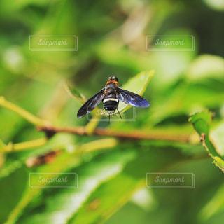 虫の写真・画像素材[704532]