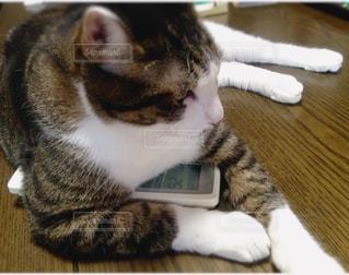 リモコンをキープする猫 - No.721409
