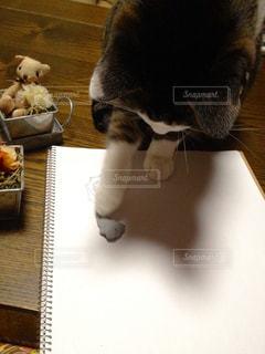 テーブルの上に座って猫の写真・画像素材[740395]