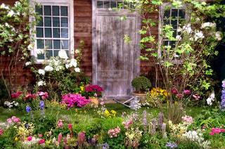 庭の花の写真・画像素材[744884]