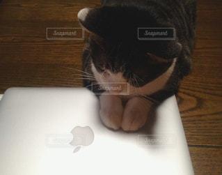 ノート パソコンを見てテーブルに座っている猫の写真・画像素材[750434]