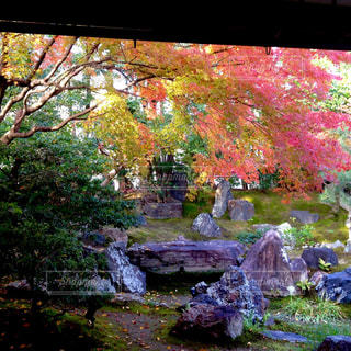 高台寺圓徳院 - No.758133