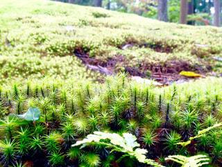 苔の里の写真・画像素材[811651]