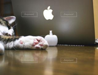 パソコンとネコの写真・画像素材[1355512]