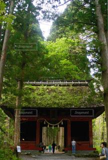 戸隠神社 奥社への参道の写真・画像素材[1565974]