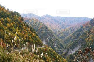 白山白川郷ホワイトロードの紅葉の写真・画像素材[1575557]