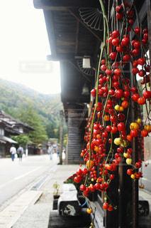 花茄子の写真・画像素材[1578259]