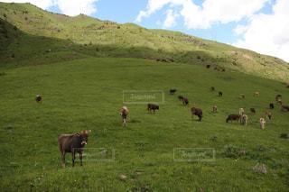 カラショーロ 国立公園 in キルギスの写真・画像素材[711960]