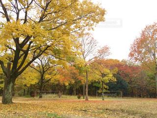 黄色い秋の写真・画像素材[714878]