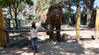 人と木の隣に赤ちゃん象立っての写真・画像素材[718869]