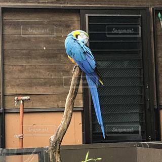 鳥の写真・画像素材[704181]