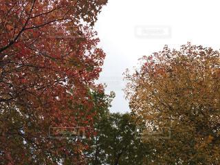 秋の写真・画像素材[704287]