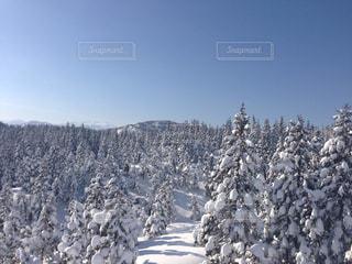 冬の写真・画像素材[704344]