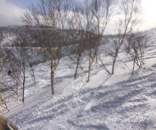 冬の写真・画像素材[704455]