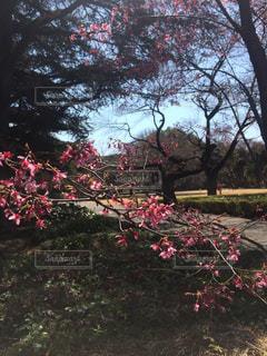春の写真・画像素材[704553]