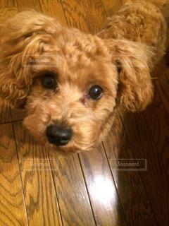 犬の写真・画像素材[704638]