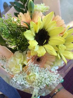 花の写真・画像素材[704692]
