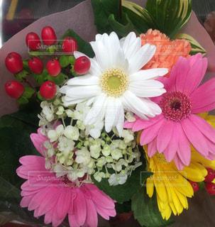 花の写真・画像素材[704758]