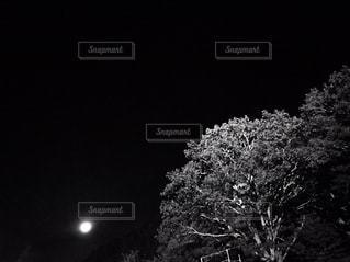近くの木のアップの写真・画像素材[706010]
